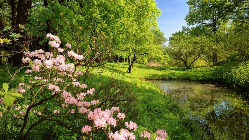 منظره بهاری تماشایی با گل های زیبا