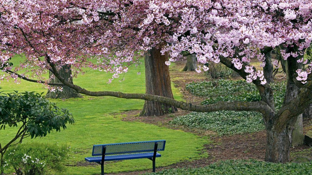 عکس آرامش دهنده طبیعت بهاری زیبا