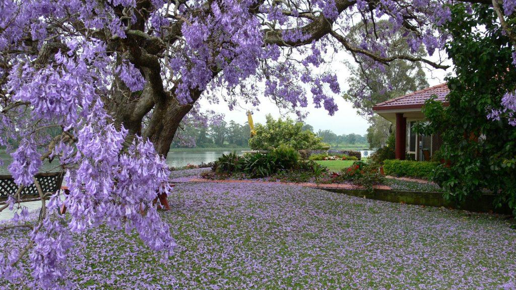 منظره زیبا و دیدنی فصل بهار