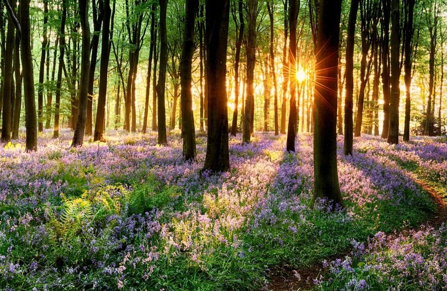 خورشید بین درختان