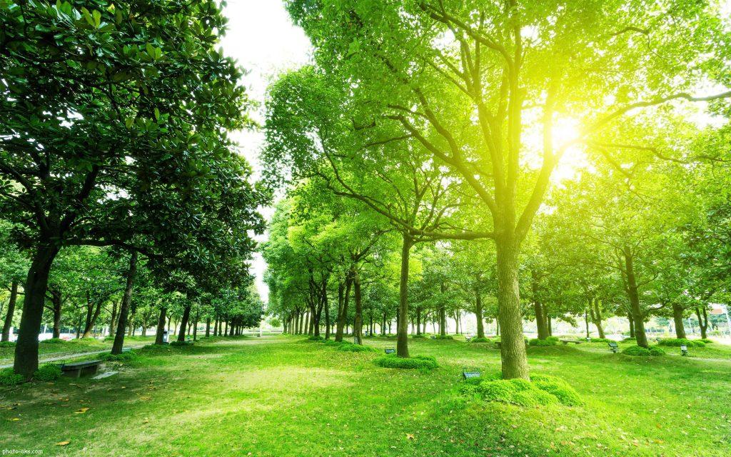 جنگل زیبای بهاری
