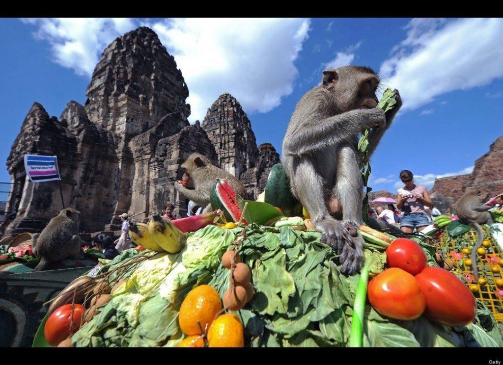 جشن میمون بوفه در تایلند