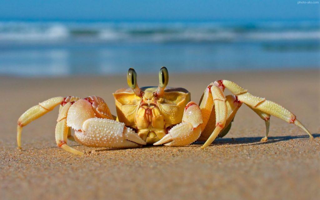 خرچنگ آیا میدانید