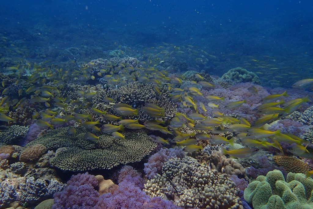 صخره مرجانی مصنوعی