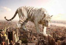 Photo of حیوانات غول پیکر و عظیم الجثه – تخیلات یک عکاس خوش ذوق