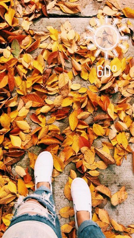 استوری دخترانه لاکچری و شیک پاییزی و برگ زرد دختران