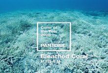 Photo of رنگ سال ۲۰۲۰ چیست ؟ سوپرایز شرکت پنتون ! + علت و نحوه انتخاب
