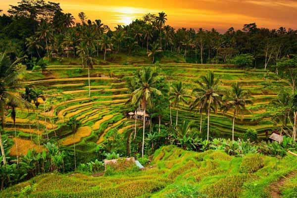 بالی مالزی