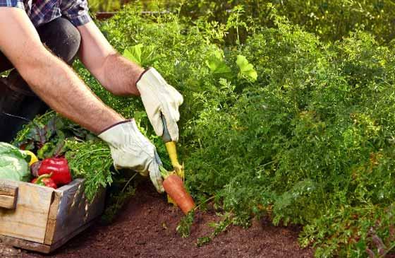 هرس کردن باغچه